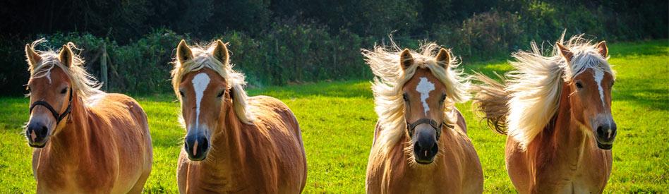 nos chevaux, notre éthique...
